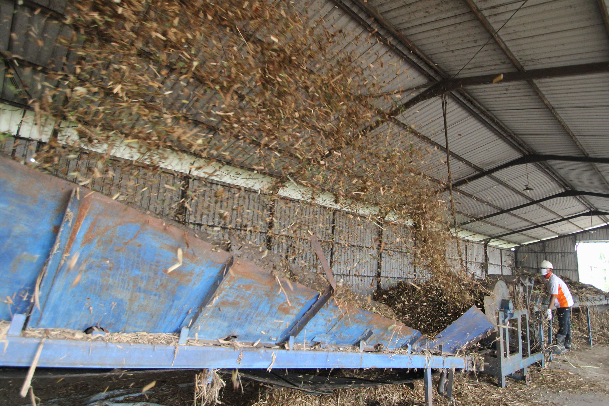 sugarcanetop---saraswanti---picture01