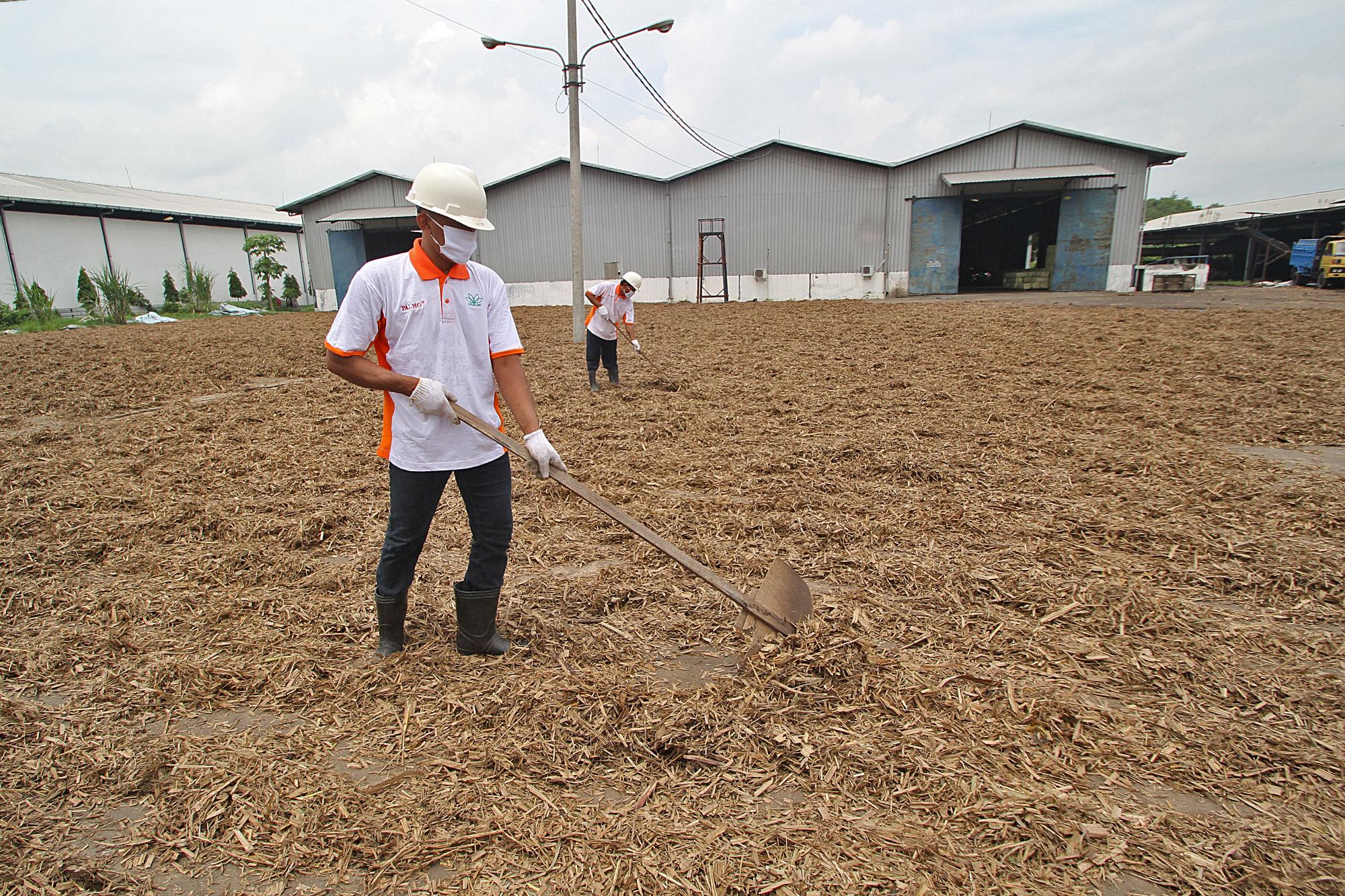 sugarcanetop---saraswanti---picture05