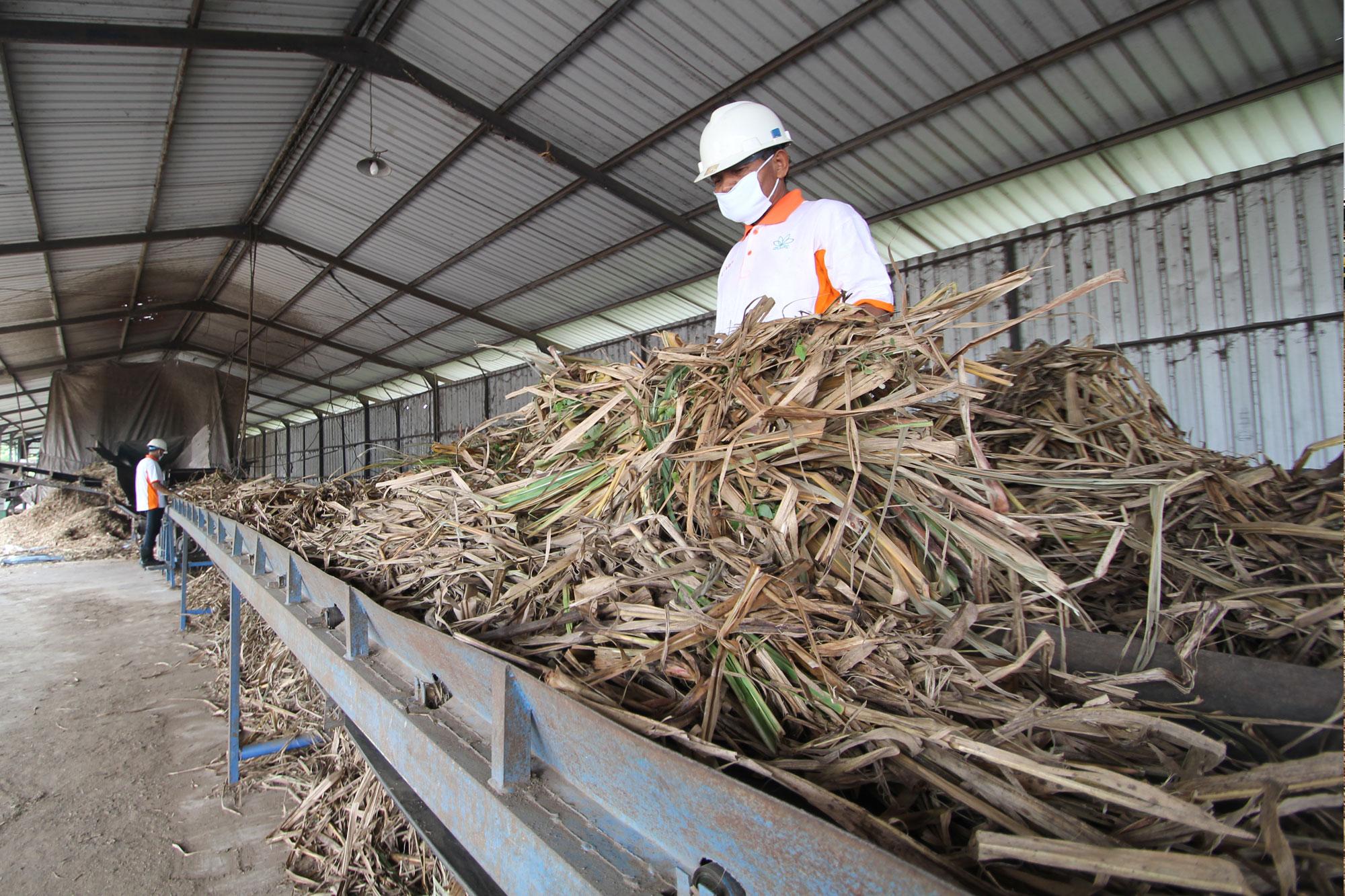 sugarcanetop---saraswanti---picture06