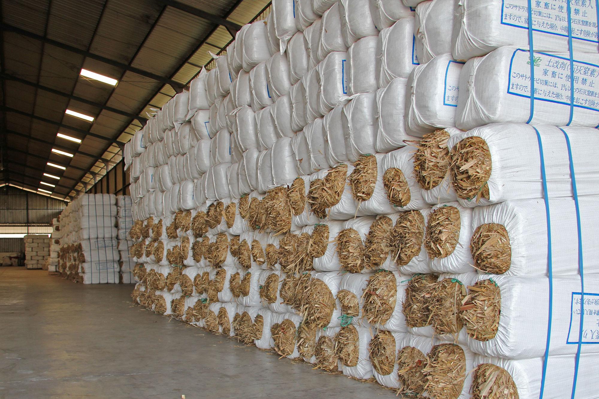 sugarcanetop---saraswanti---picture07