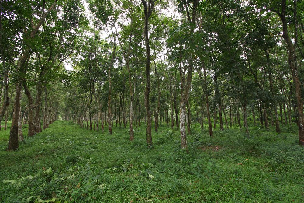 saraswanti ssp 076