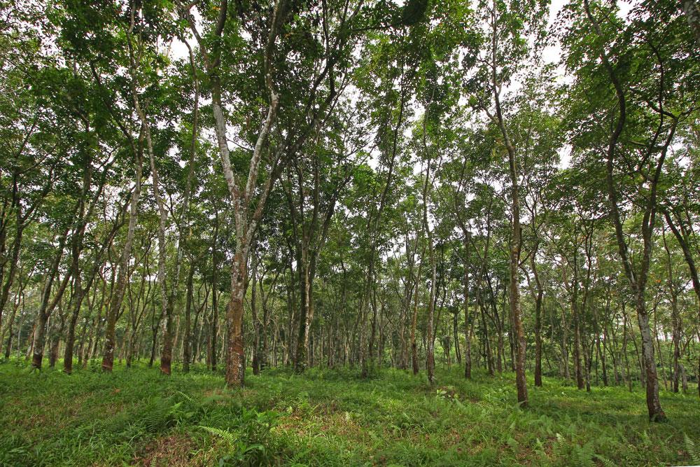 saraswanti ssp 077
