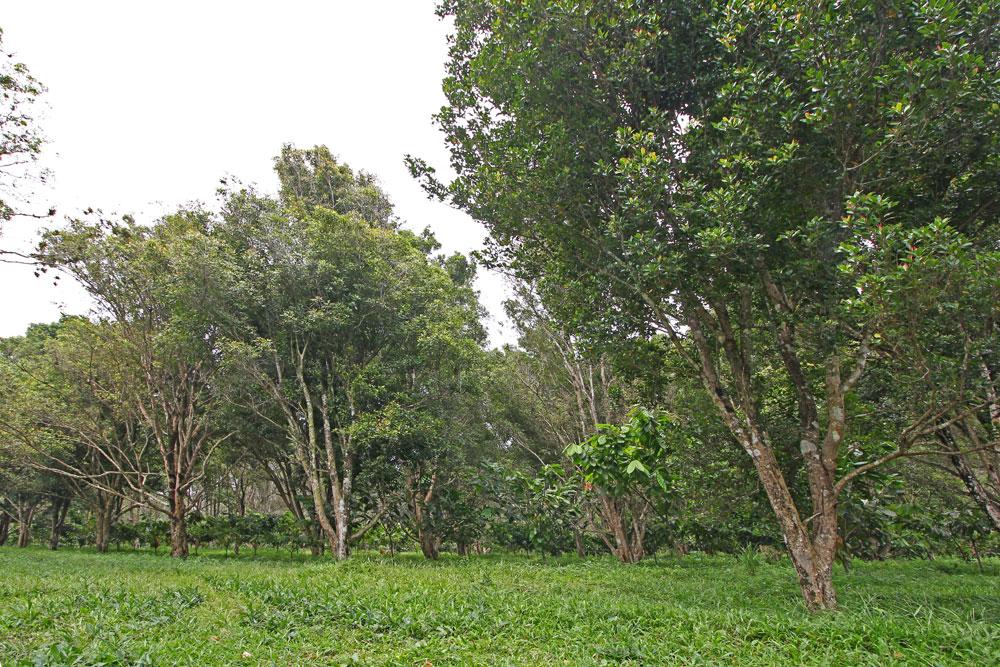 saraswanti ssp 078